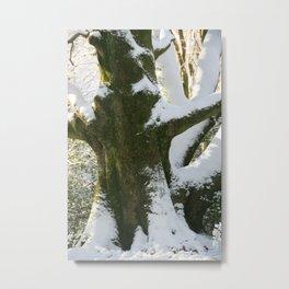The Old Beech Tree Metal Print