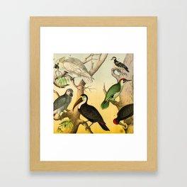 6 Birds Framed Art Print