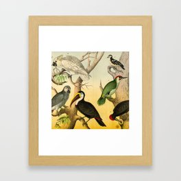 6 Birds Framed Art Print