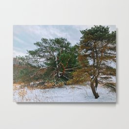 In the winter desert Metal Print
