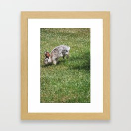 Rabbit in grass. Framed Art Print