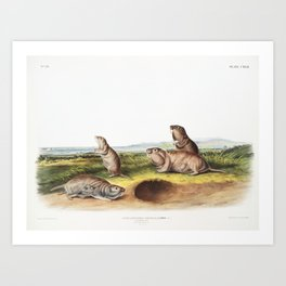 The Camas Rat (Audubon) Art Print