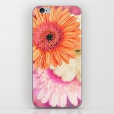 Sweet Daisy Sorbet iPhone & iPod Skin