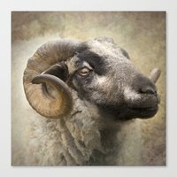 ram Canvas Prints featuring Ram by Pauline Fowler ( Polly470 )