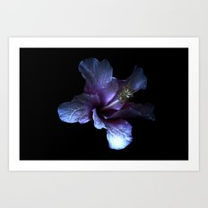 Single flower beauty 3 Art Print