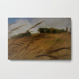 Amber Waves Metal Print