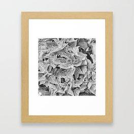 coleus black and white Framed Art Print