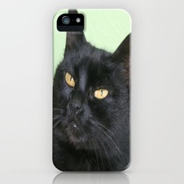 Relaxed Black Cat Portrait  iPhone Case