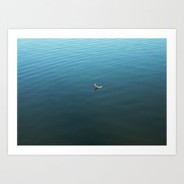 Feather on Water Art Print