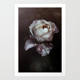 The Poetry of a Rose Art Print