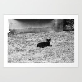 CATastrophic. Art Print