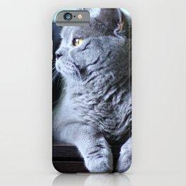 British shorthair fat cat indoor portrait. iPhone Case