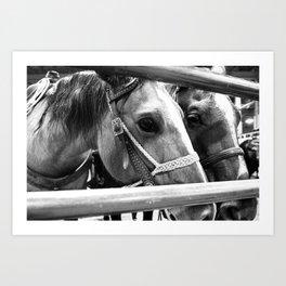 Rodeo Horses Art Print