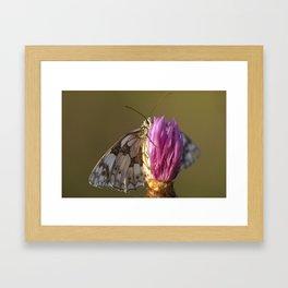 MARBLED WHITE BUTTERFLY Framed Art Print
