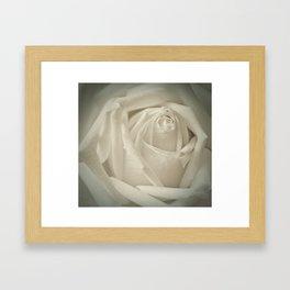 Soft White Rose Framed Art Print