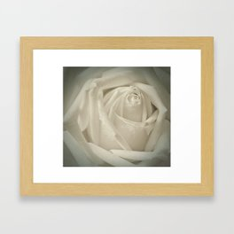 Soft White Rose Framed Art Print