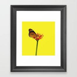 African Monarch Framed Art Print