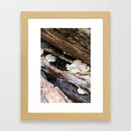 Where The Fairies Live Framed Art Print