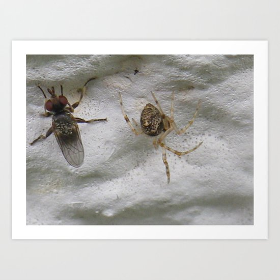 fly and a spider Art Print