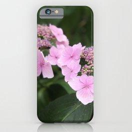 Pink flower in Butchart's Garden iPhone Case