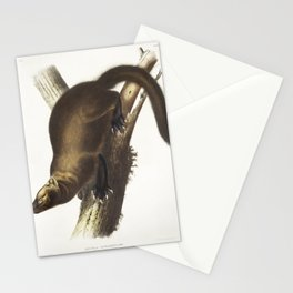 Pennants Marten (Mustela Canadensis) from the viviparous quadrupeds of North America (1845) illustra Stationery Cards