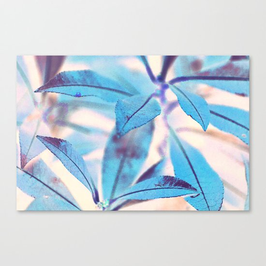 #117 Canvas Print