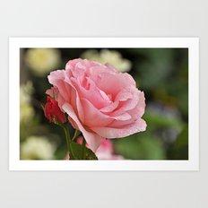 Pink wet rose Art Print