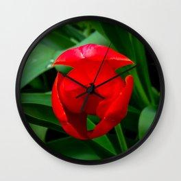 Tulip in Bloom Wall Clock