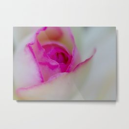 Pink Rose Bud by Reay of Light Photography Metal Print