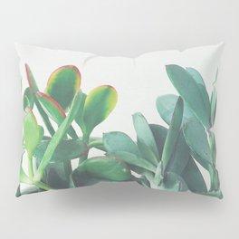 Crassula Group Pillow Sham