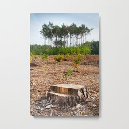 Woods logging one stump after deforestation Metal Print