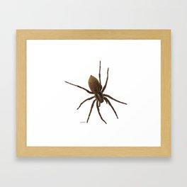 House spiders Framed Art Print
