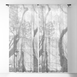 Cedro Forest. Dream Woods. Bw Sheer Curtain