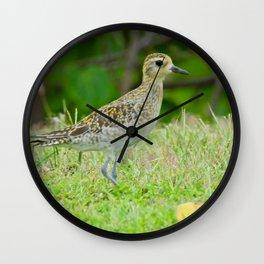 Pacific Golden Plover Wall Clock