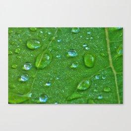 Wassertropfen Canvas Print