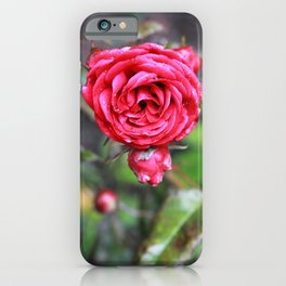 Another Red Autumn Rose iPhone Case