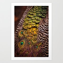 Peacock Tail Feathers Art Print