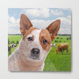 Australian Cattle Dog Red Metal Print