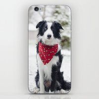 border collie iPhone & iPod Skins featuring Snow Border Collie by MelissaLaDouxPhoto