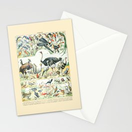 Exotic Birds // Oiseaux II by Adolphe Millot 19th Century Science Textbook Diagram Artwork Stationery Cards