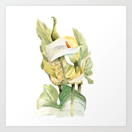 Watercolor hand painted illustration with callas in gentle tone Art Print