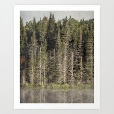 trees at the edge of the pond Art Print