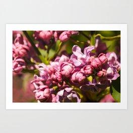 Branch of fresh purple lilac flowers in a city public park close-up Art Print