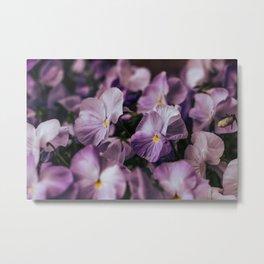 Violet and Purple Metal Print