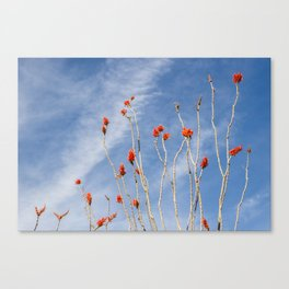 Red Desert Flowers in the Sky Canvas Print