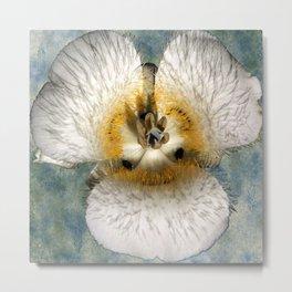 Mariposa Lily 1 Metal Print