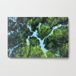 Crack willow Metal Print