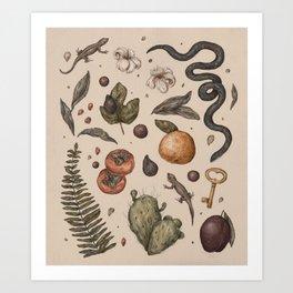 Florida Nature Walks Art Print