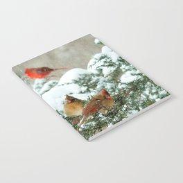 After the Snow Storm: Three Cardinals Notebook