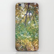 forest 014 iPhone & iPod Skin